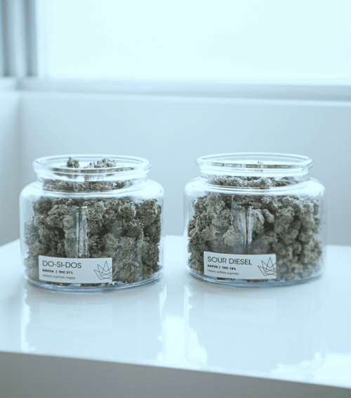 AMP Cannabis Jars with Marijuana Nugs and Labels