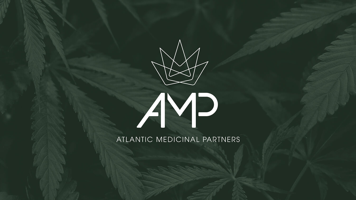 AMP Logo on green background with weed